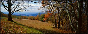 Clearing with trees in autumn colors and distant ridges. Shenandoah National Park (Panoramic color)