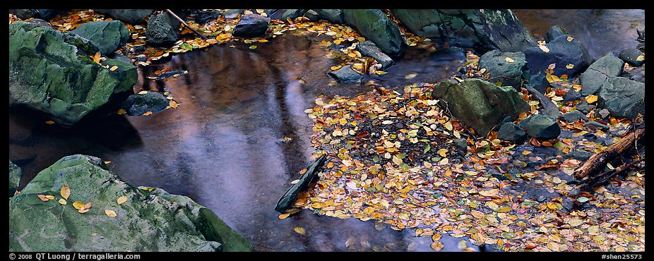 Autumn close-up of pond with fallen leaves and rocks. Shenandoah National Park (color)