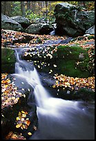 Creek and mossy boulders in fall with fallen leaves. Shenandoah National Park, Virginia, USA.
