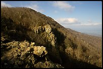 Rocky outcrop, Little Stony Man, early morning. Shenandoah National Park, Virginia, USA. (color)
