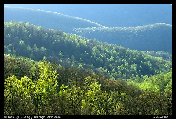 Trees and ridgelines in the spring, late afternoon. Shenandoah National Park (color)