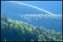 Trees and ridgelines in the spring, late afternoon. Shenandoah National Park ( color)