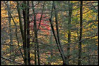 Tree trunks and branches against a backdrop of fall colors. Shenandoah National Park, Virginia, USA.