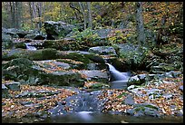 Hogcamp Branch of the Rose River. Shenandoah National Park, Virginia, USA. (color)
