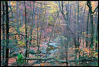 Creek in fall. Shenandoah National Park ( color)