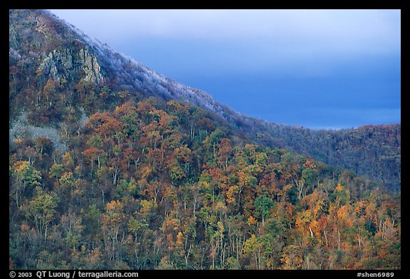 Hillside with fall colors, rocks, and early snow. Shenandoah National Park (color)