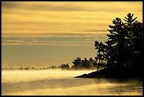 Fog lifting up in early morning and trees on shore of Kabetogama lake. Voyageurs National Park ( color)