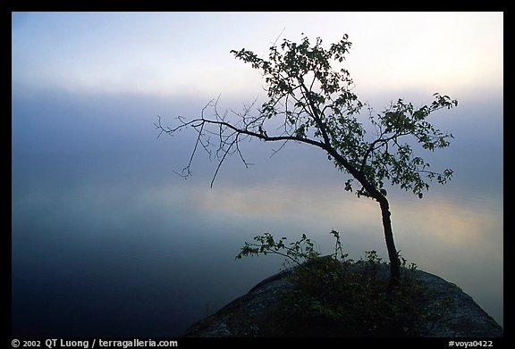 Tree in morning fog, Kabetogama lake near Woodenfrog. Voyageurs National Park (color)