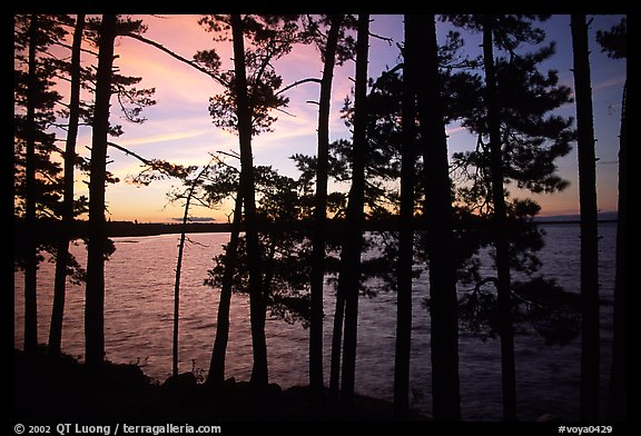 Pine trees silhouettes at sunset, Woodenfrog. Voyageurs National Park (color)