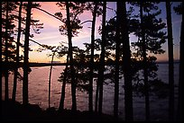 Pine trees silhouettes at sunset, Woodenfrog. Voyageurs National Park, Minnesota, USA.