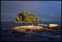 Islands and birds, Kabetogama lake. Voyageurs National Park ( color)