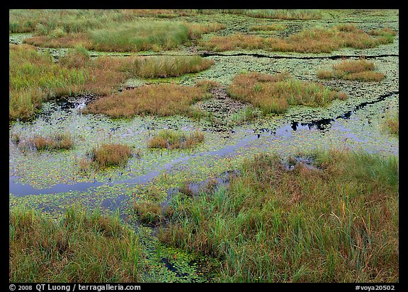 Grasses and marsh. Voyageurs National Park (color)