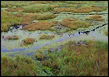 Grasses and marsh. Voyageurs National Park ( color)