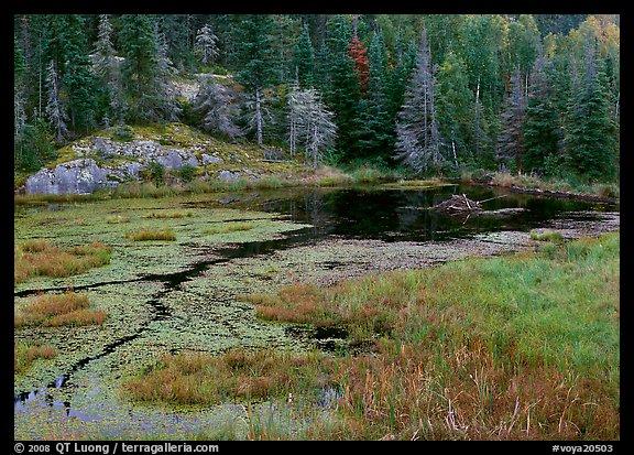 picture  photo  beaver pond  voyageurs national park