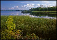 Aquatic grasses and lake, Black Bay. Voyageurs National Park, Minnesota, USA.