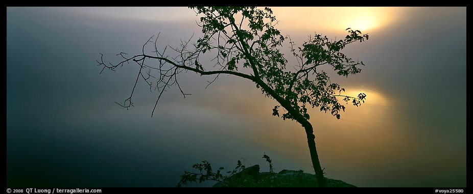 Tree on foggy lakeshore with sun behind. Voyageurs National Park (color)