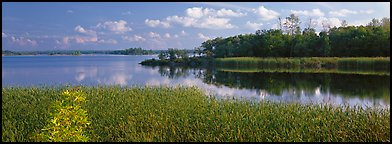 Reeds on lakeshore. Voyageurs National Park (Panoramic color)