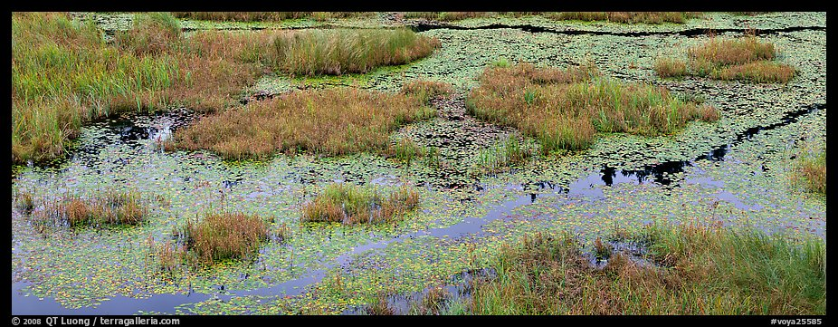 Beaver marsh and reeds. Voyageurs National Park (color)