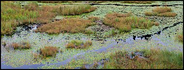 Beaver marsh and reeds. Voyageurs National Park (Panoramic color)