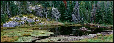 Marsh and north woods forest. Voyageurs National Park (Panoramic color)