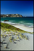 Sand dunes and Cuyler Harbor, afternoon, San Miguel Island. Channel Islands National Park, California, USA. (color)