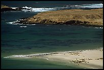 Point Bennet and rookeries, mid-day, San Miguel Island. Channel Islands National Park, California, USA. (color)