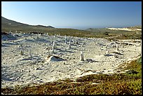 Stone castings of ancient trees, San Miguel Island. Channel Islands National Park, California, USA. (color)