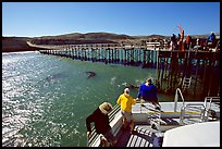 Bechers bay pier, Santa Rosa Island. Channel Islands National Park, California, USA. (color)