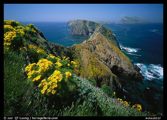 Coreopsis and chain of islands, Inspiration Point, Anacapa Island. Channel Islands National Park, California, USA.