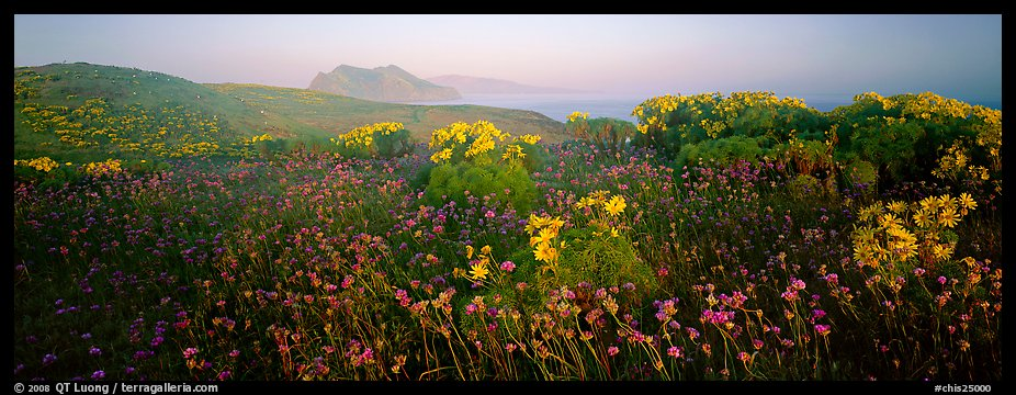 Wildflowers and early coastal mist, Anacapa Island. Channel Islands National Park (color)