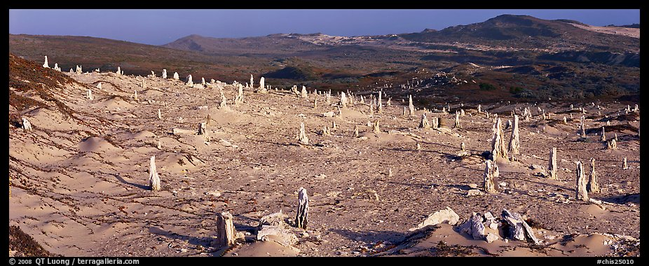 Rare caliche forest, San Miguel Island. Channel Islands National Park (color)