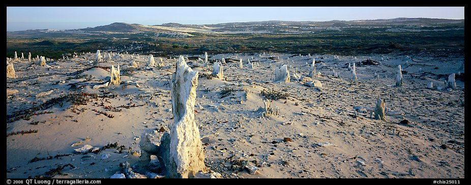 Sand castings on stumps, San Miguel Island. Channel Islands National Park (color)