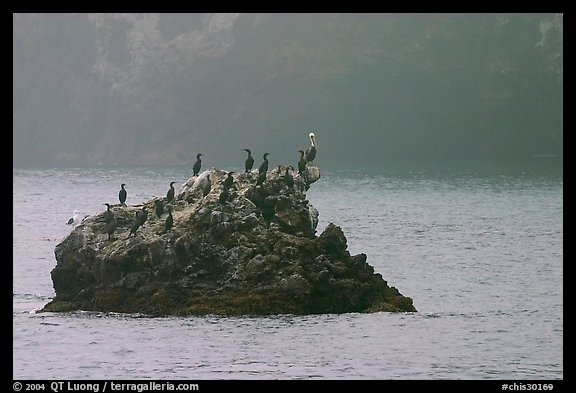 Rock covered with cormorants and pelicans, Santa Cruz Island. Channel Islands National Park, California, USA.