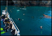 Diving boat and scuba divers in water, Annacapa. Channel Islands National Park, California, USA.