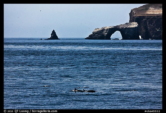 Dolphins and Arch Rock. Channel Islands National Park (color)