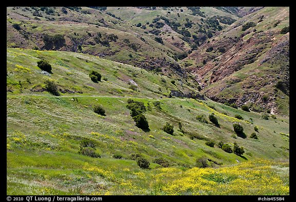 Scorpion Canyon in the spring, Santa Cruz Island. Channel Islands National Park (color)