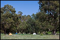 Campground in Scorpion Canyon, Santa Cruz Island. Channel Islands National Park, California, USA. (color)