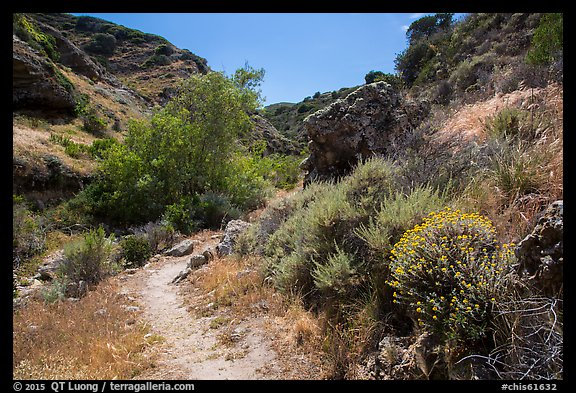 Cherry Canyon Trail, Santa Rosa Island. Channel Islands National Park (color)