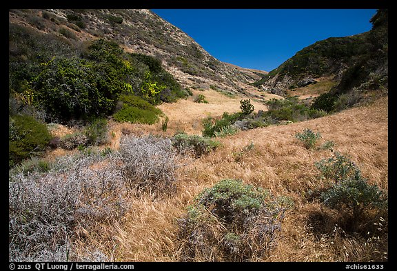 Cherry Canyon, Santa Rosa Island. Channel Islands National Park (color)