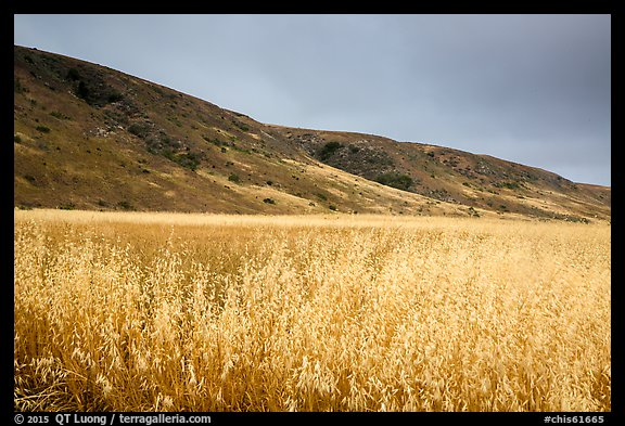 Grasses and hills, Santa Rosa Island. Channel Islands National Park (color)