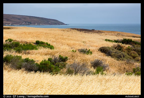 Golden grasses and Bechers Bay, Santa Rosa Island. Channel Islands National Park (color)