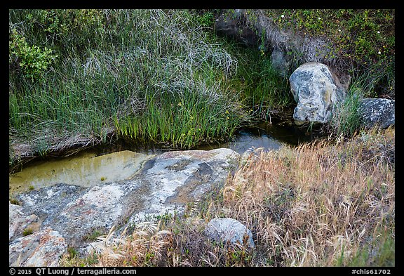 Close-up of stream and vegetation, Lobo Canyon, Santa Rosa Island. Channel Islands National Park (color)