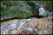 Close-up of stream and vegetation, Lobo Canyon, Santa Rosa Island. Channel Islands National Park ( color)
