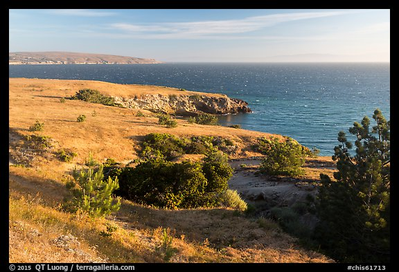 Torrey Pines and coastline near Black Point, Santa Rosa Island. Channel Islands National Park (color)