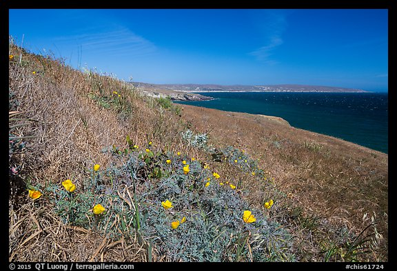 Poppies and grasses near Black Point, Santa Rosa Island. Channel Islands National Park (color)