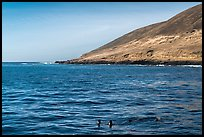 Sea lions and Santa Barbara Island. Channel Islands National Park ( color)