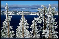 Trees with hoar frost above  Lake. Crater Lake National Park, Oregon, USA. (color)