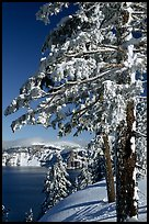 Trees framing  lake in winter. Crater Lake National Park, Oregon, USA. (color)