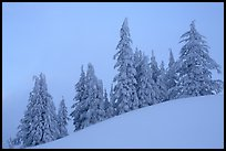 Snow-covered pine trees on a hill. Crater Lake National Park, Oregon, USA. (color)