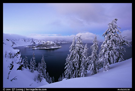 Wizard Island and Lake at dusk, framed by snow-covered trees. Crater Lake National Park, Oregon, USA.